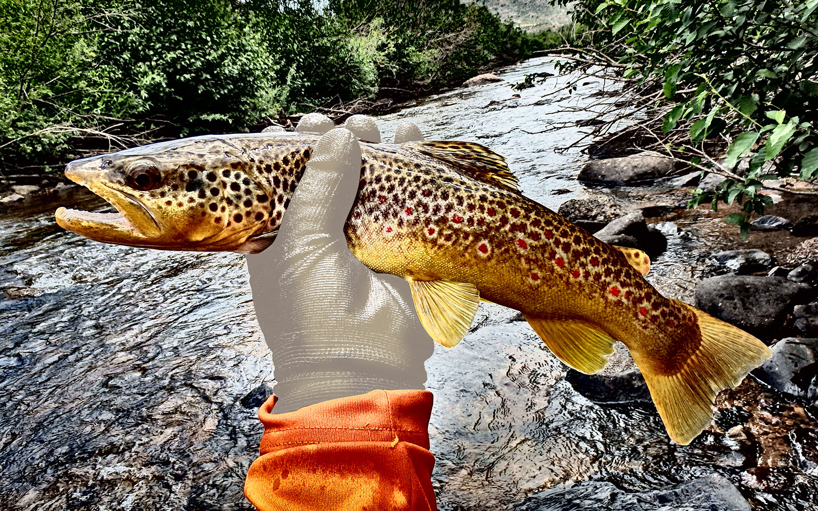 A gloved hand holds a live spotted fish caught from a stream in the background