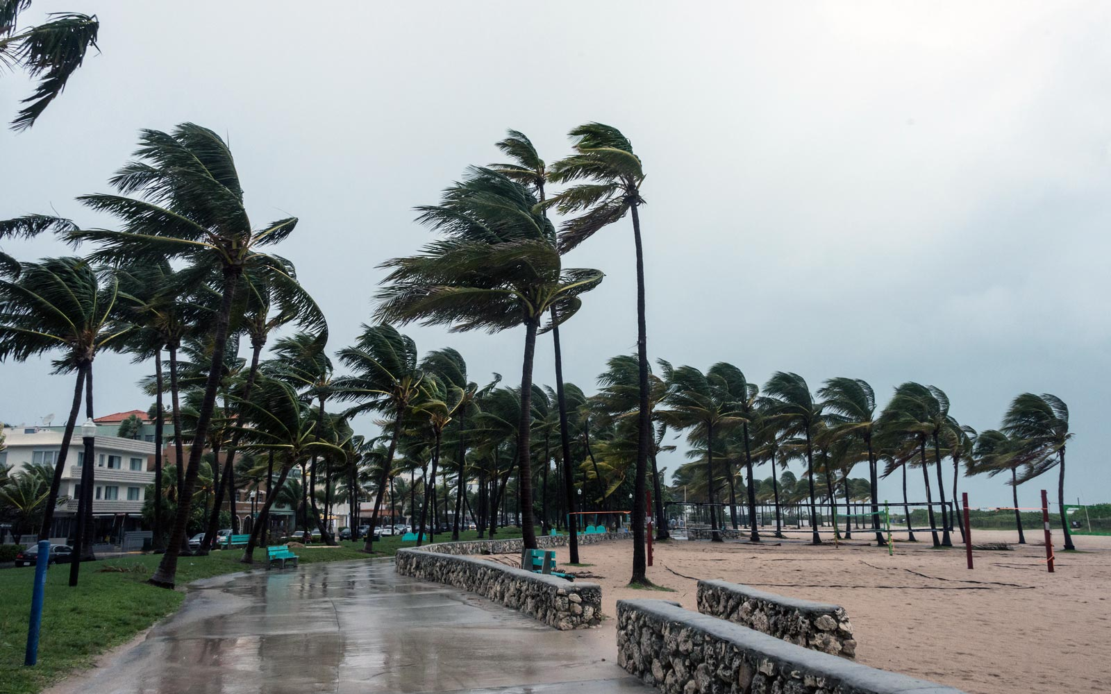 Drenched walkway with palm trees with fronds blown sideways by wind at a Gulf Coast beachside area during a substantial storm.