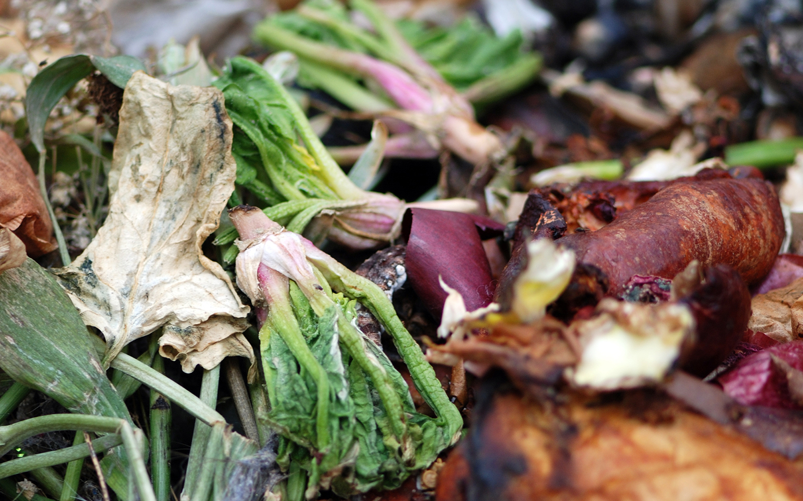 food and vegetable scraps